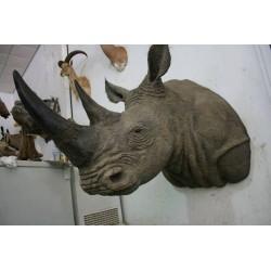 Rinoceronte blanco artificial de pecho