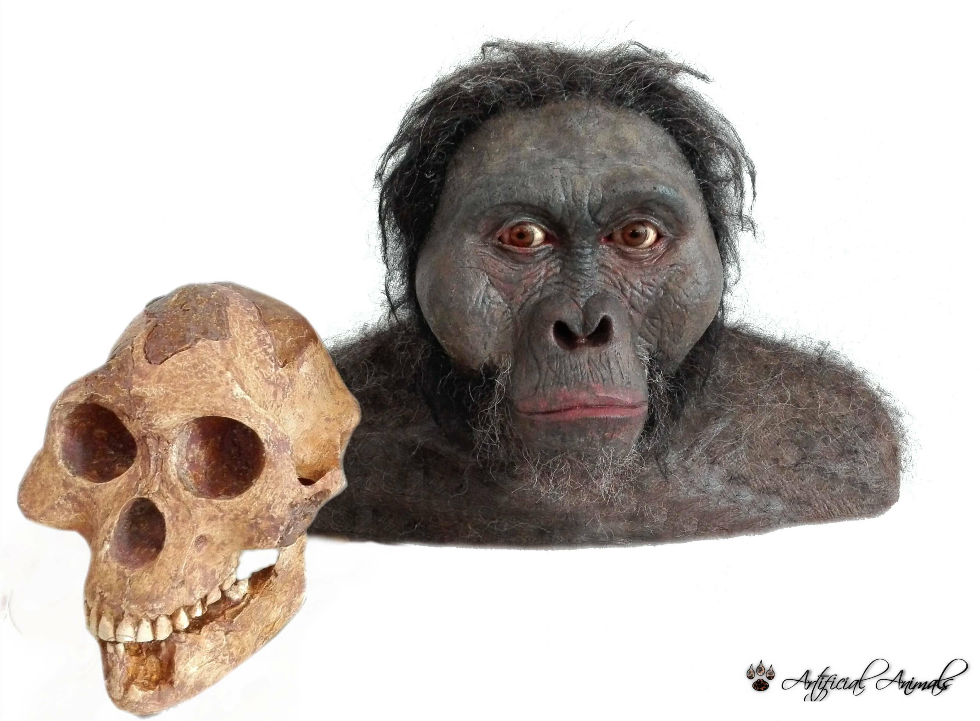 Australopithecus, Lucy