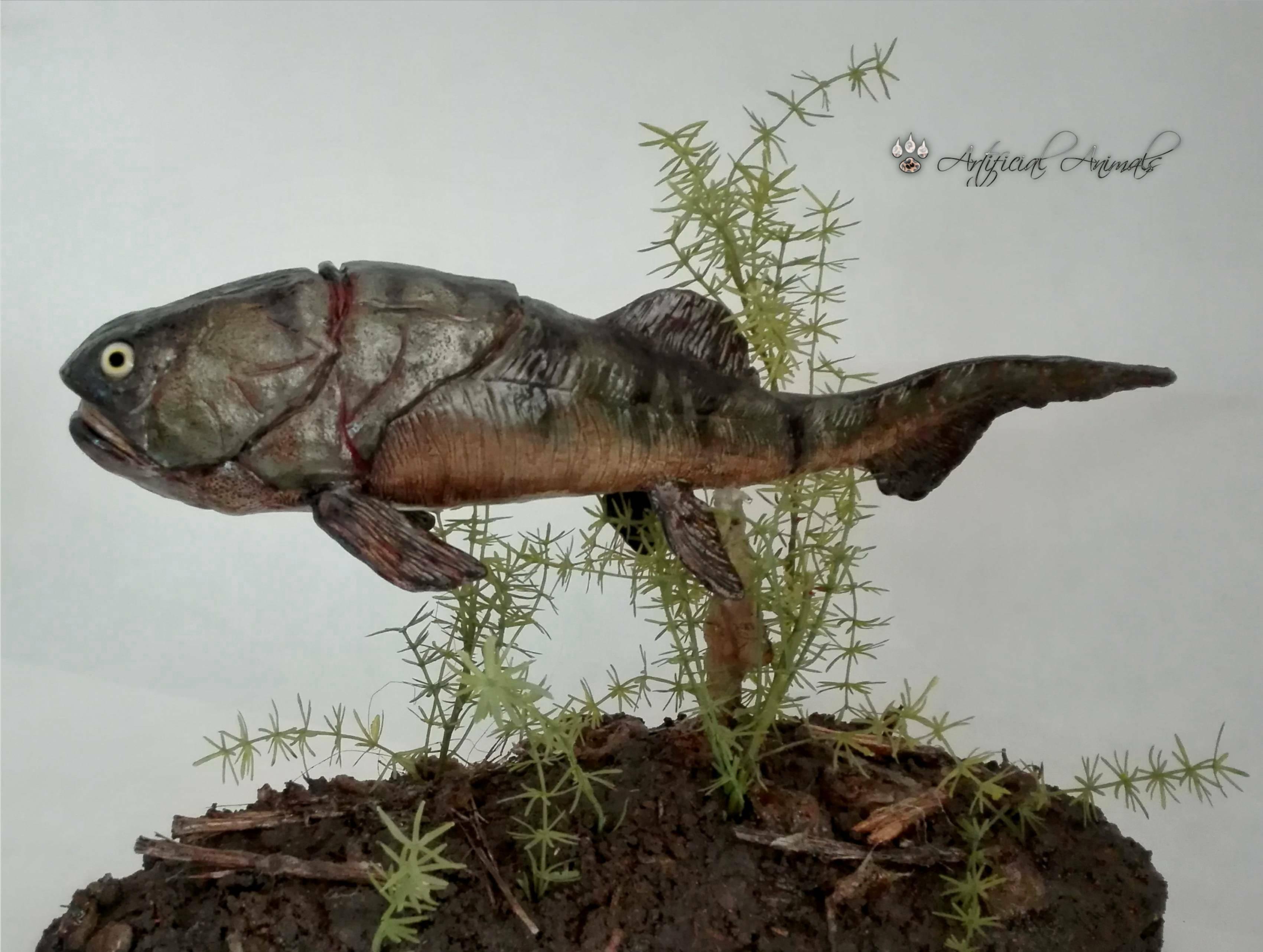 Placoderm fish