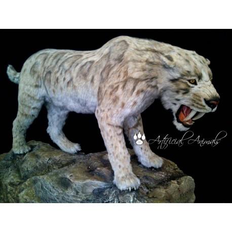 Tigre dientes de sable escala 1:1