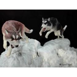 Perros árticos customizados