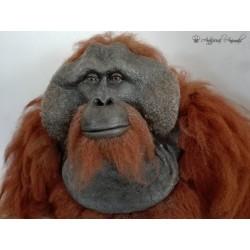 orangután artificial (Pongo pygmaeus)