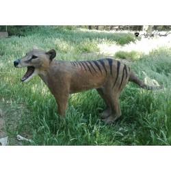 Tigre de Tasmania (Thylacinus cynocephalus)
