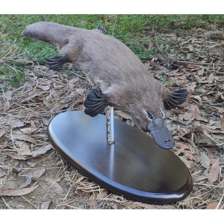 Ornitorrinco artificial (Nuevo modelo)