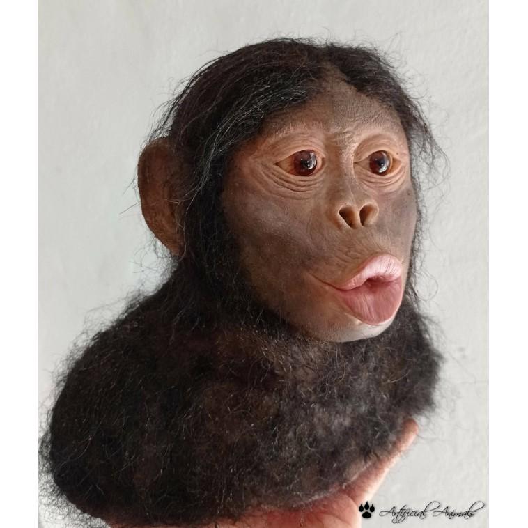 Australopithecus africanus (Niño de Taung)